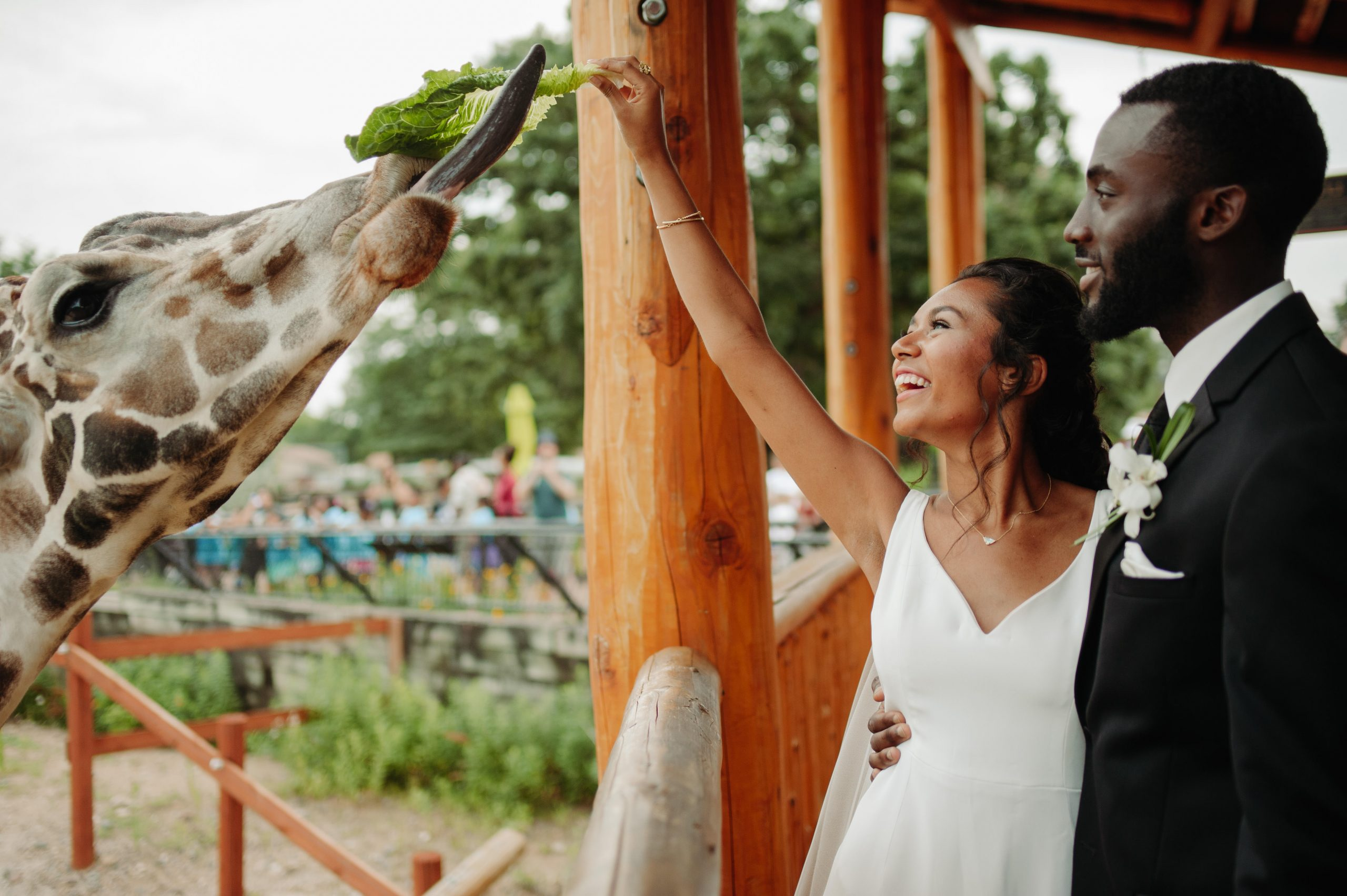 bride and groom feeding giraffe como zoo st paul minnesota