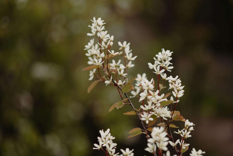 Summer blooms north shore minnesota